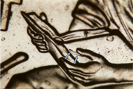 2009 Doubled Die Lincoln Cent #52